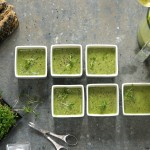 Raw Greenylicious herb soup with BBQ Grissini