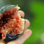 How to eat a fresh Fig (Warning: Passion Overload)