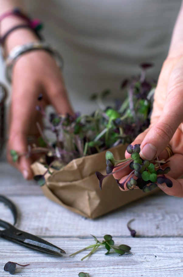 Earthsprout Guide | Grow Your Microgreens! How? What? Why? www.Earthsprout.com