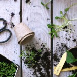 Earthsprout Guide | Grow Your Microgreens!