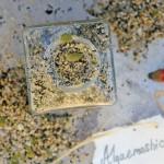 Algaemashio & Crossing Oceans